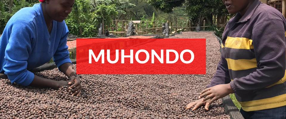 Muhondo